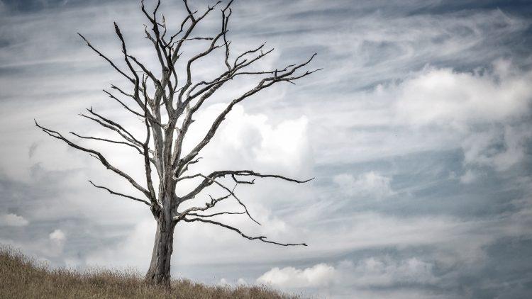 A cultura de morte – Parte IV A mídia
